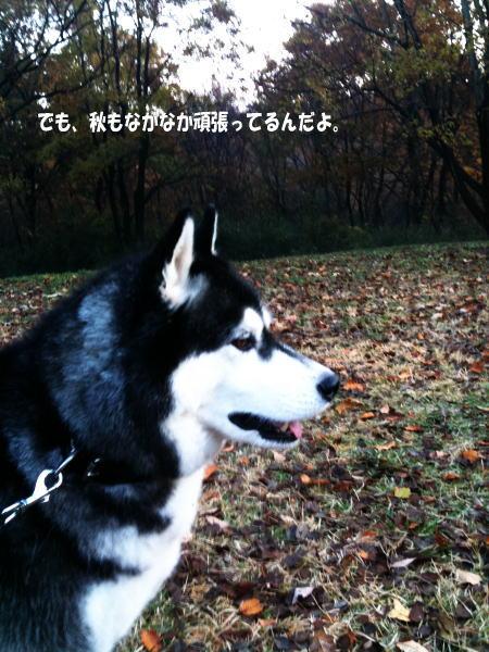 20111207_3.jpg