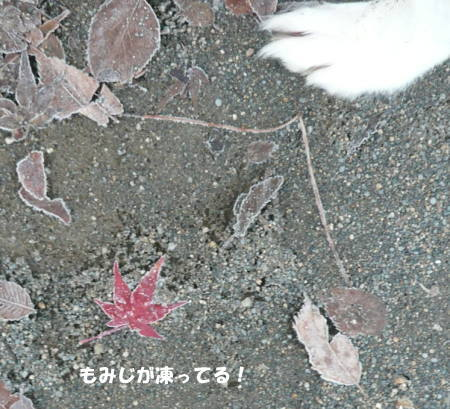 20111210_1.jpg