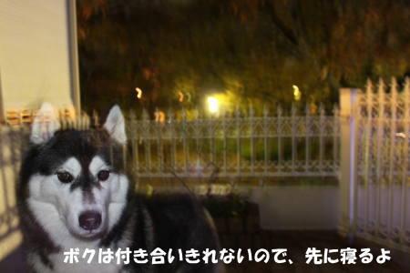 20111211_5.jpg