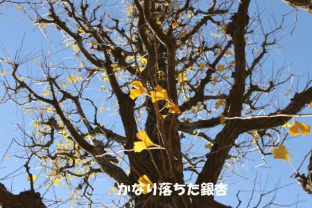 20111218_4.jpg