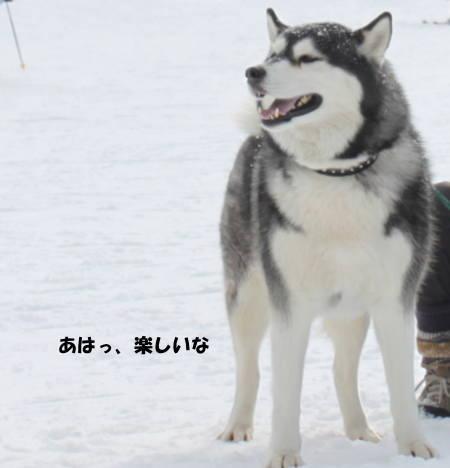 20111224_17.jpg