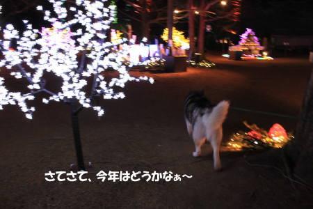 20111224_2.jpg