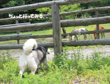 201200813_15.jpg