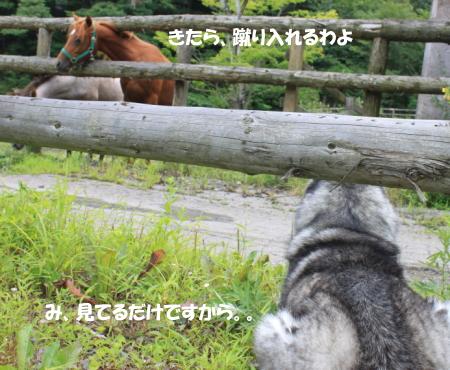 201200813_18.jpg