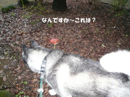 201200923_2.jpg