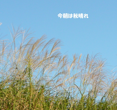 201201005_5.jpg