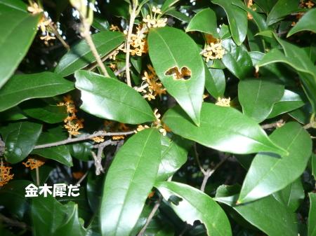 201201005_7.jpg