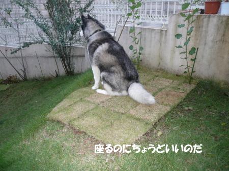 201201009_3.jpg