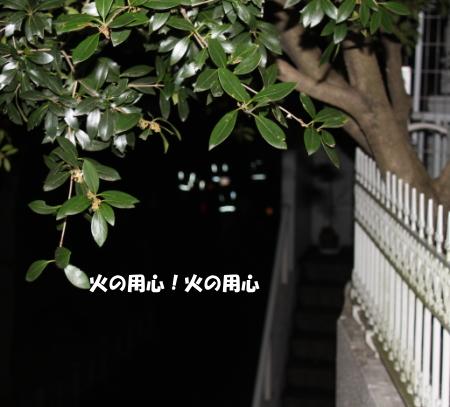 201201230_4.jpg