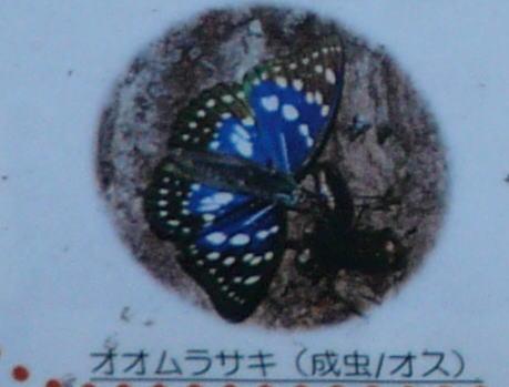 20120319_4.jpg