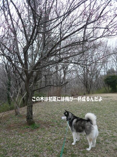 20120323_2.jpg