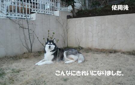 20120325_5.jpg