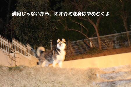 20120327_14.jpg