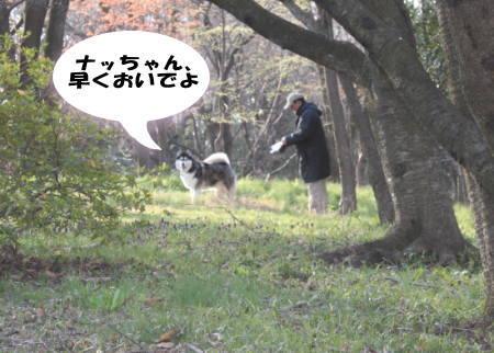20120408_01.jpg