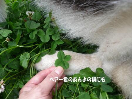 20120517_3.jpg