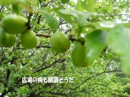 20120518_4.jpg