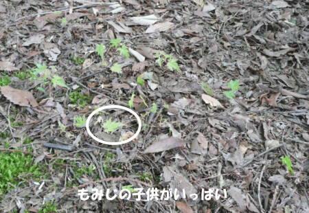20120606_01.jpg