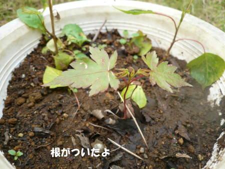 20120606_02.jpg