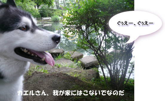 20120606_03.jpg