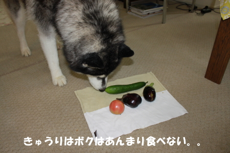 20120708_03.jpg
