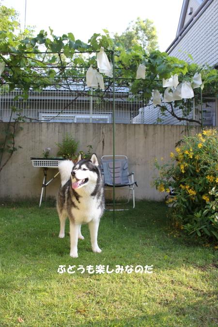 20120708_06.jpg