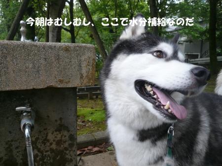 20120715_6.jpg