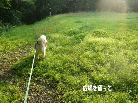 20120718_10.jpg