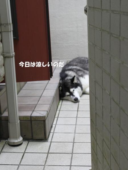 20120722_10.jpg