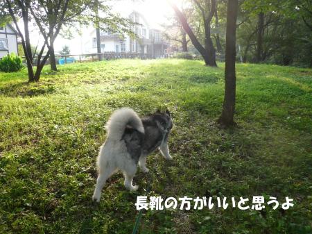 20120730_4.jpg