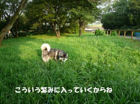 20120730_5.jpg