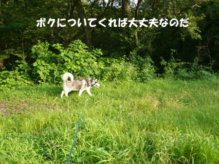 20120730_6.jpg