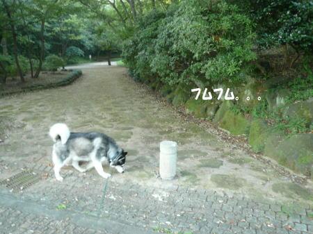 20120822_6.jpg