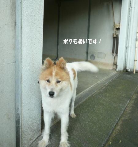 20120822_8.jpg