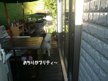 20120822_9.jpg