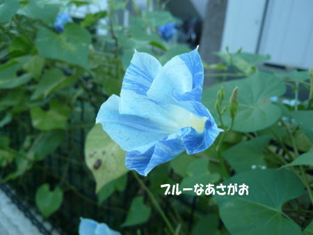 20120827_1.jpg