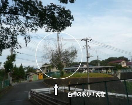20120830_1.jpg