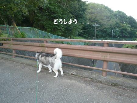 20120830_2.jpg