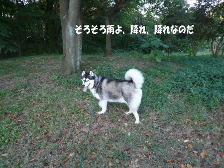 20120830_4.jpg