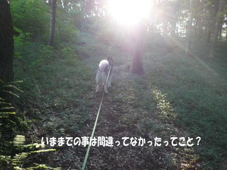 20120905_4.jpg