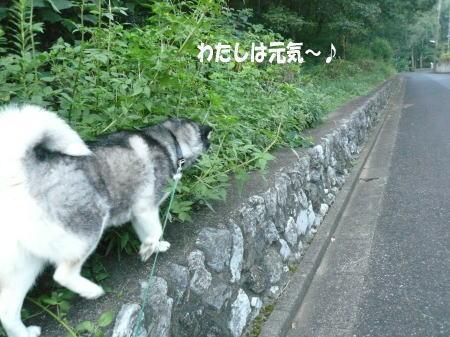 20120910_4.jpg