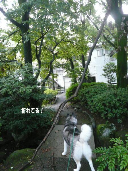 20120917_5.jpg