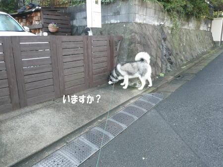 20120918_4.jpg