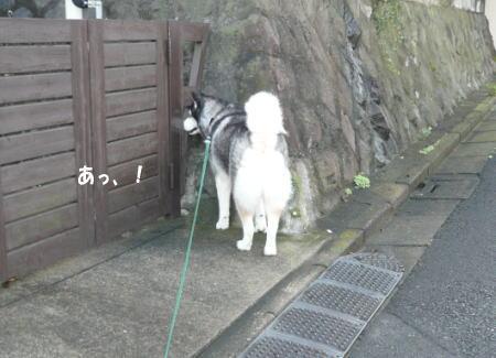 20120918_6.jpg