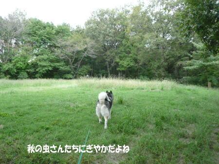 20121003_3.jpg