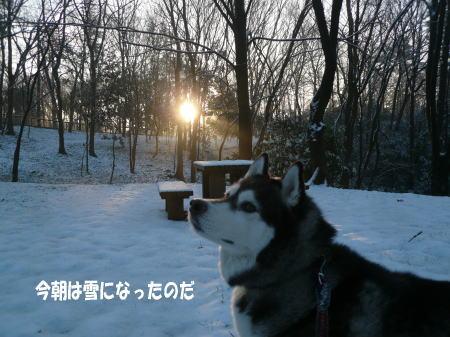 20130213_1.jpg