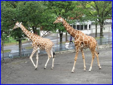 asahiyama-zoo-2011-8-21-3.jpg