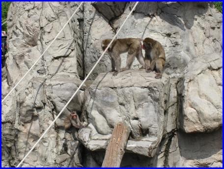 asahiyama-zoo-2011-8-21-5.jpg