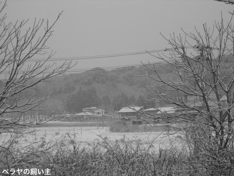 BNK-SNOW-IMG_8750 2