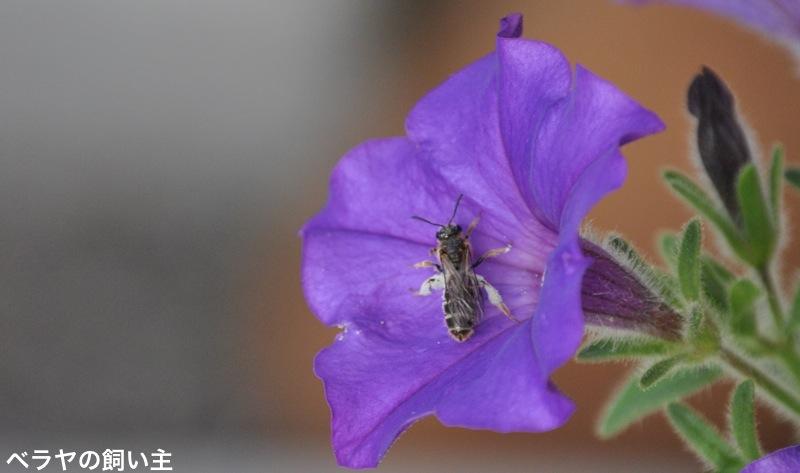 Bee_0006.jpg