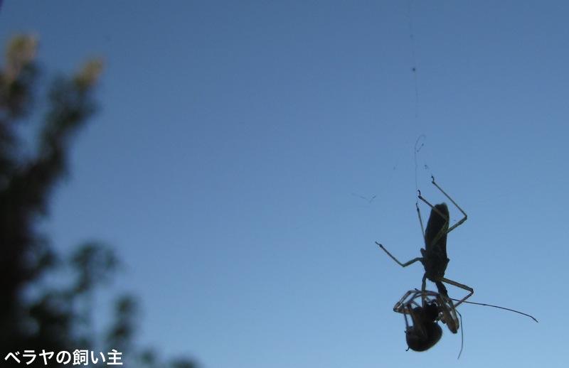 Spider_4090.jpg